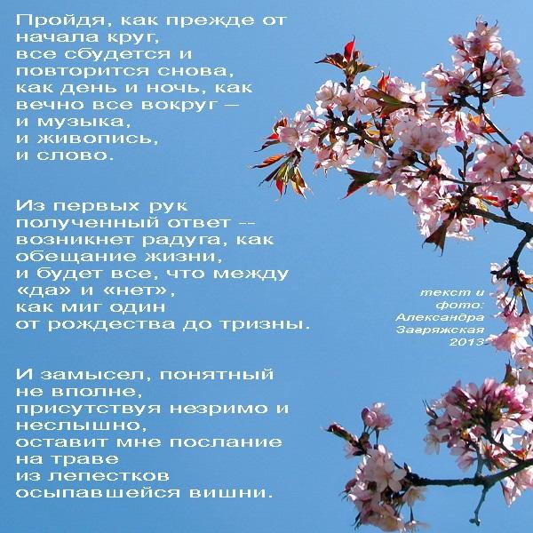 """Сакура"" текст и фото:  Александра Загряжская  2013 г."