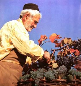 записки о художниках Тбилисоба РТВЕЛИ сбор Винограда (фото 2)
