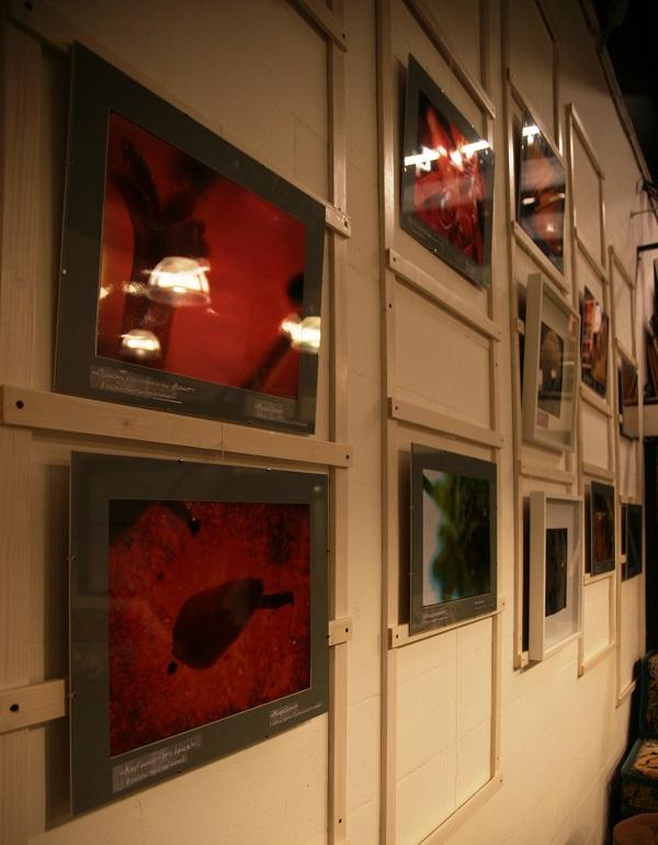Выставка фотографий  кинооператора и сценариста Геннадия Немых  в студии дизайна BriArt 11 июня 2014 г.