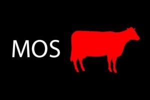 Прообразами известного символа художника Пита Килкенни стали коровы Корта и Ханни, которые однажды изменили его взгляды на жизнь и творчество