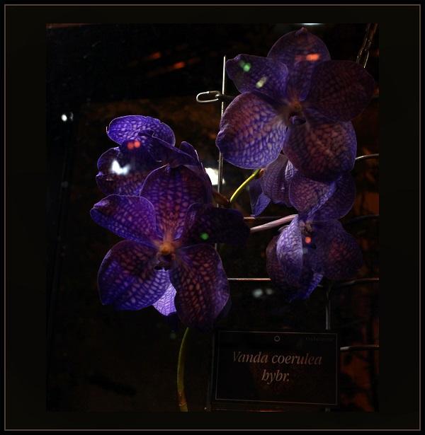 Аптекарский огород орхидеи Арт-Релиз.РФ фото Александра Загряжская