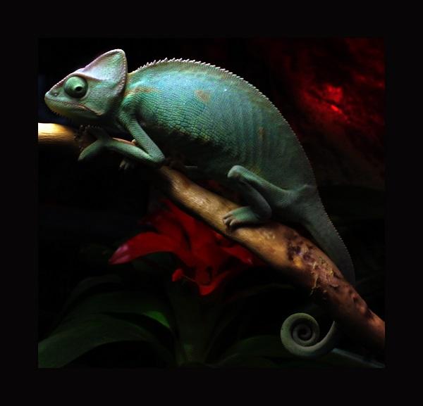 Аптекарский огород хамелеон фото 14 Арт-Релиз.РФ фото Александра Загряжская
