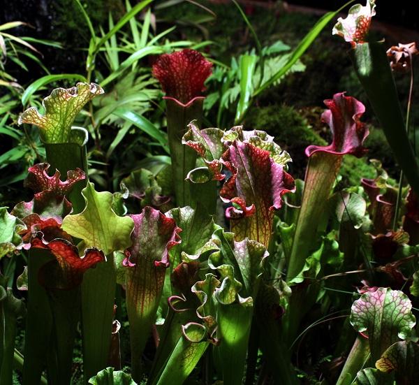 Аптекарский огород цветы Арт-Релиз.РФ фото Александра Загряжская
