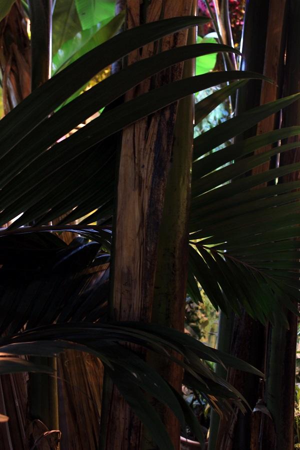 Аптекарский огород.фото 10 Пальмы Арт-Релиз.РФ фото Александра Загряжская